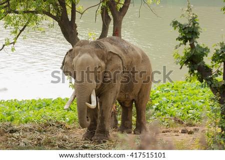 Elephant standing under a tree - stock photo