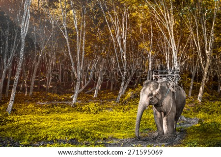 Elephant stands in the middle of the forest in the jungle. Krabi province, Thailand - stock photo