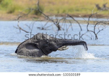 Elephant swimming in a dam in the Pilansberg Game Reserve South Africa - stock photo