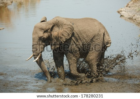 Elephant takes a bath in Kruger National Park - stock photo