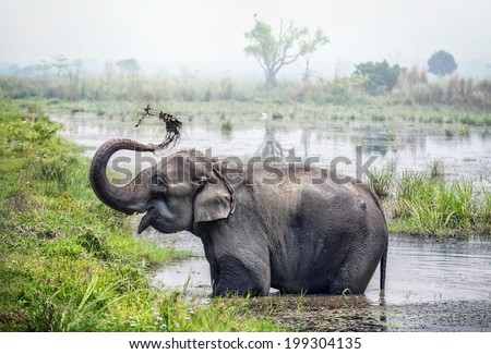 Elephant taking a bath in the river of Chitwan national park, Nepal - stock photo