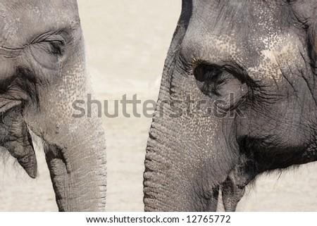 Elephant talk - stock photo