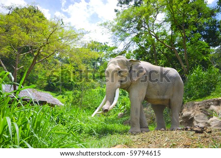 Elephant Thailand - stock photo