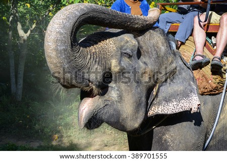 Elephant. Tourists ride on elephant, located in Chiang mai, Thailand. - stock photo