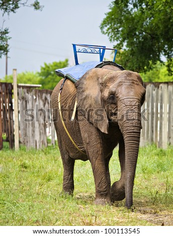 Elephant used for tourist rides.