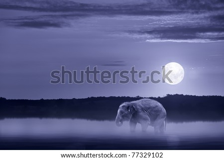 Elephant wading in water - stock photo