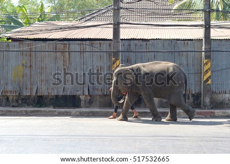 elephant walking in road town from north of thailand