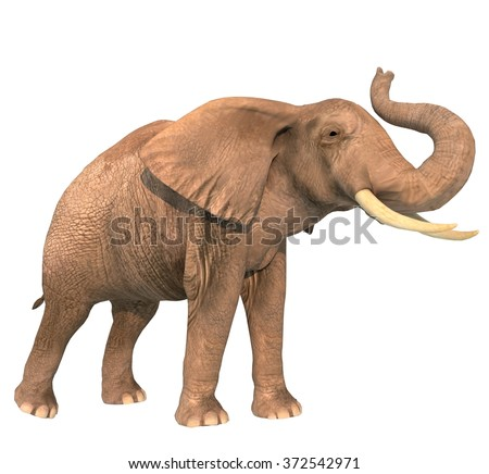 Elephant with trunk raised on a white background
