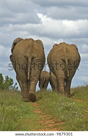 Elephants are very Family Orientated