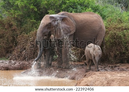Elephants at a water hole in Africa - stock photo
