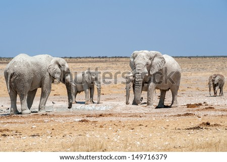elephants at a waterhole  in etosha national park namibia