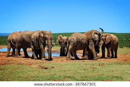 Elephants at a watering hole. Creative artwork of african wildlife. Elephant Love. Amazing image. Sweet memories of travel to Africa & South African safari. Postcard. Wild animals in National Parks