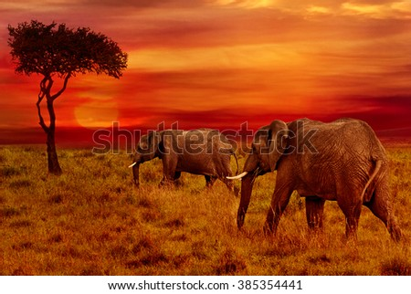 Elephants at African Sunset Background - stock photo