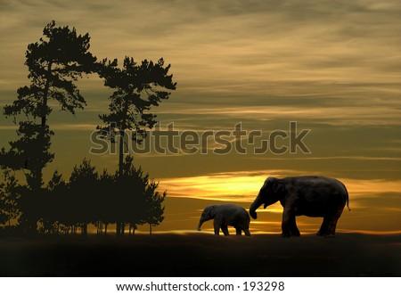 Elephants at sunset - stock photo