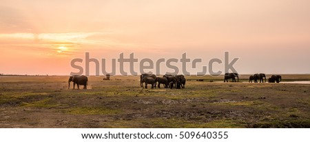 Elephants at sunset, Chobe River, Chobe National Park, Botswana