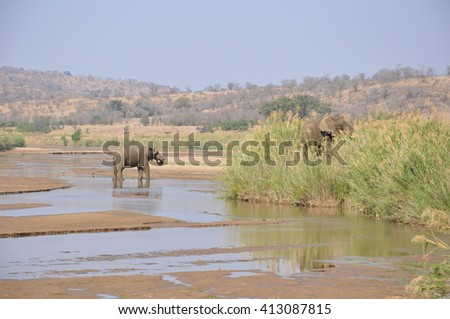 Elephants at the Hluhluwe and Imfolozi nature reserve, south Africa - stock photo