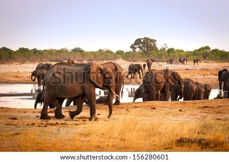 elephants at waterhole - stock photo