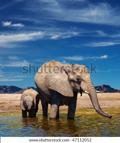 Elephants at watering in african savanna - stock photo