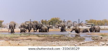 Elephants bathing - Wildlife from Namibia - stock photo