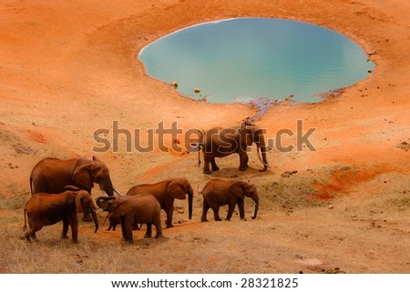 Elephants by the pool - stock photo