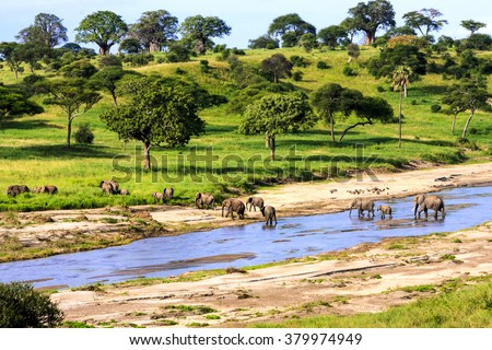 Elephants crossing  the river in Serengeti National Park, Tanzania, Africa - stock photo