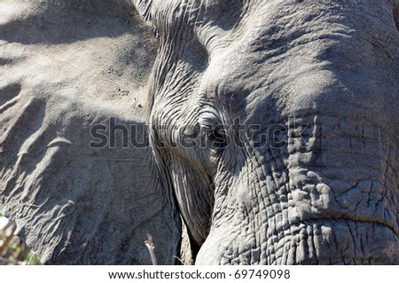 Elephants face - stock photo
