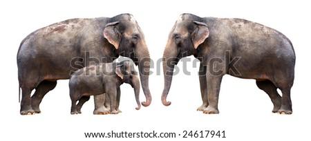 Elephants family - isolated - stock photo