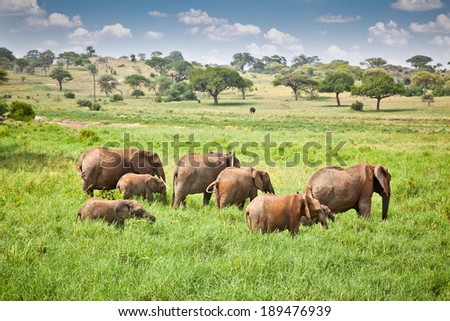 Elephants family on pasture in African savanna . Tanzania, Africa.  - stock photo