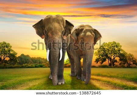 elephants family on sunset - stock photo