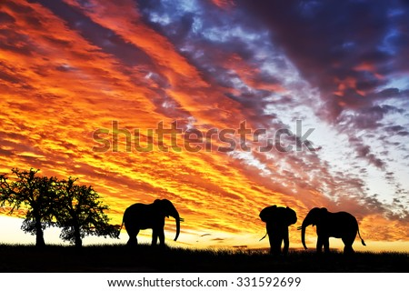elephants in africa - stock photo