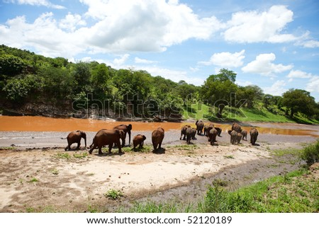Elephants in Tarangire national park, Tanzania - stock photo