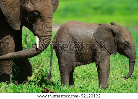 Elephants in Tarangire national park, Tanzania