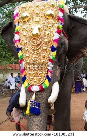 Elephants in temple festival in Kerala India. Decorated elephant at the annual elephant festival. - stock photo
