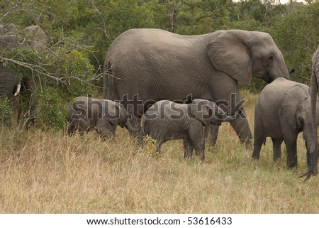 Elephants in the Sabi Sands Private Game Reserve, South Africa