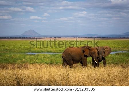 Elephants in the Tarangire National Park in north Tanzania, Africa - stock photo
