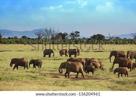 Elephants in Tsavo East Park 06 - stock photo