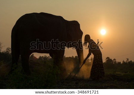 Elephants live in villages