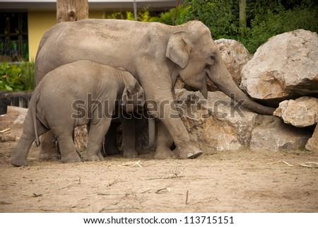 elephants, mother and baby - stock photo