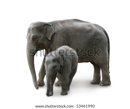 Elephants - mother and baby, isolated with path, shadow - stock photo