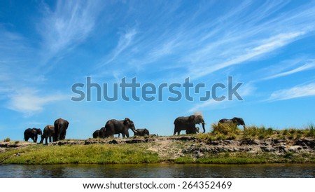 Elephants on a riverbank - stock photo