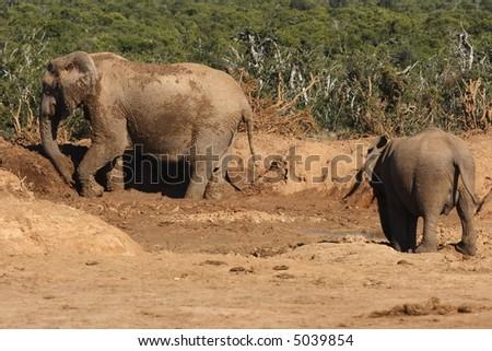 Elephants playing in the mud on a hot day