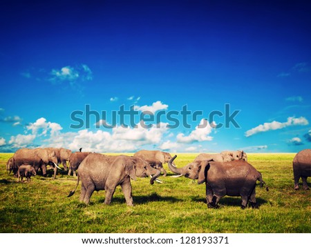 Elephants playing with their trunks on African savanna. Safari in Amboseli, Kenya, Africa - stock photo