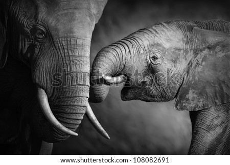 Elephants showing affection (Artistic processing) - stock photo