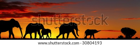 Elephants silhouettes in night savanna - stock photo