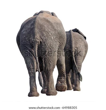elephants walking away - stock photo
