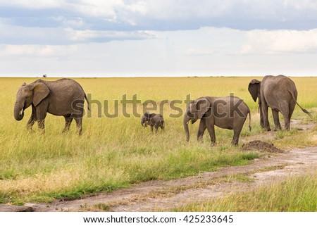 Elephants with a small calf on grass savanna - stock photo