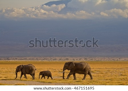 Elephants with kanya mountain in the back