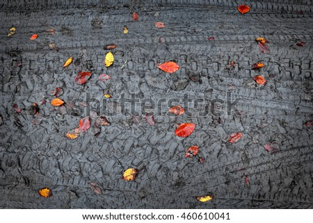 elevated view of dirt road and fallen colorful autumn leaves