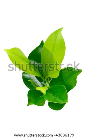 Elevated view of green young plant on white background - stock photo