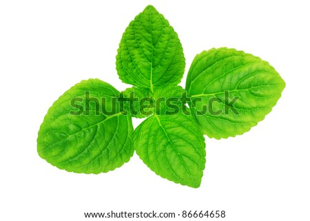 Elevated view of young green leaves on white background